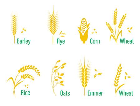 Zboża zestaw ikon z ryżu, pszenicy, kukurydzy, owsa, żyta, jęczmienia.