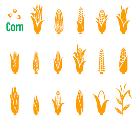 Conjunto de iconos con el maíz en un fondo blanco. Foto de archivo - 62327366