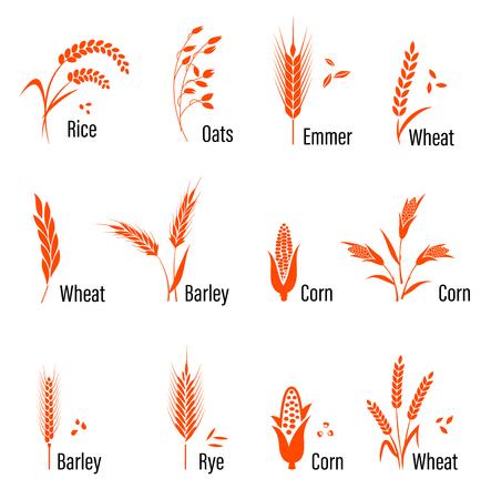 cebada: Cereales conjunto de iconos con el arroz, el trigo, el maíz, la avena, el centeno, la cebada. Concepto para la etiqueta de productos orgánicos, la cosecha y la agricultura, panadería grano de comida sana Vectores