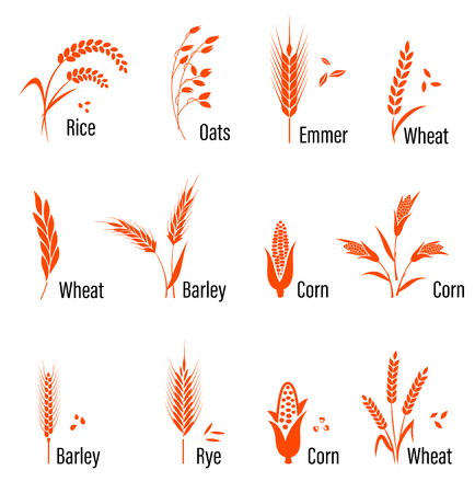 whole grain: Cereals icon set with rice, wheat, corn, oats, rye, barley. Concept for organic products label, harvest and farming, grain bakery healthy food