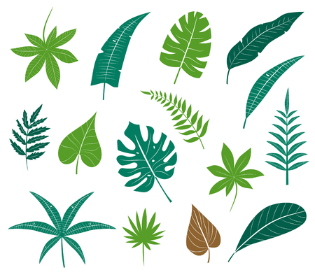 tropical plants: icon set different plants, palm leaves, isolated on white background. Leaf collection silhouette. Tropical leaves collection. Flat leafs. Natural green tropical set leaves.