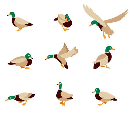 漫画似顔絵アヒルと漫画のアヒル漫画幸せな動物。ベクトル鳥アイコンのコレクション。白い背景で隔離のフラット スタイルのベクトル図です。