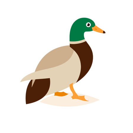 Cartoon caricature domestic duck and cartoon duck comic happy animal. illustration isolated on white background. Illustration