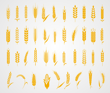 brown rice: Cereals icon set with rice, wheat, corn, oats, rye, barley. Concept for organic products label, harvest and farming, grain bakery healthy food
