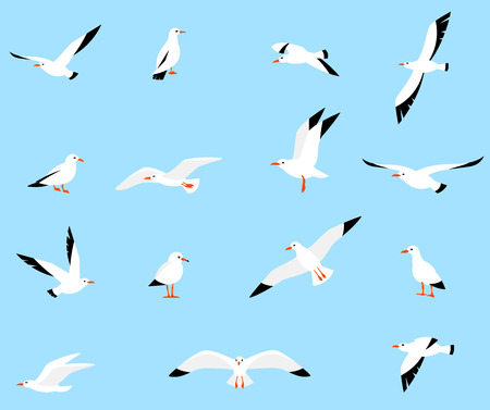 set of seagulls in a flat style isolated on white background. Sea Gull, a beautiful bird. Cute bird in cartoon style.