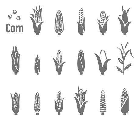 grain fields: Corn icons. illustration isolated on white background. Illustration