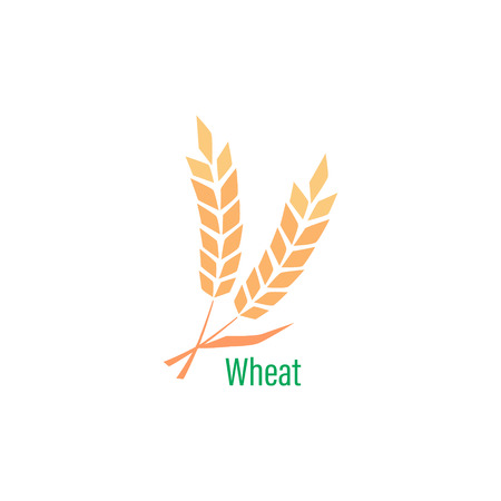 template with wheat. Whole grain, natural, organic background for bakery package, bread products. Illustration
