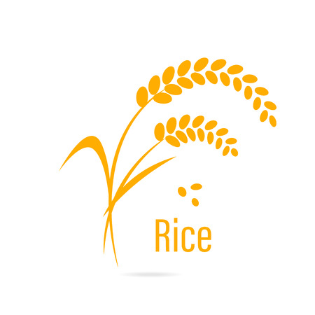 rice paddy: Cereal icon with rice. illustration isolated on white background.
