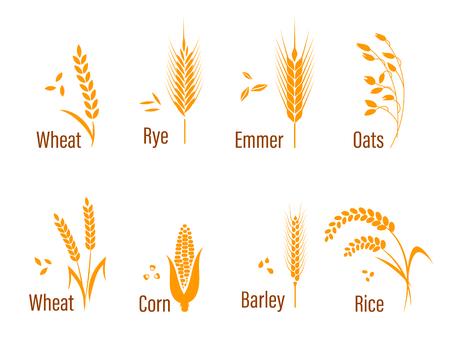 米、小麦、トウモロコシ、オート麦、ライ麦、大麦でセットされた穀物のアイコン。オーガニック製品ラベル、収穫や農作業、穀物、パン、健康食