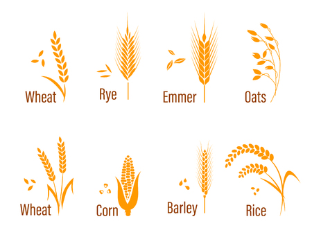Zboża zestaw ikon z ryżu, pszenicy, kukurydzy, owsa, żyta, jęczmienia. Koncepcja ekologicznej produktów marek, zbiorów i rolnictwa, zboża, piekarnia, zdrowej żywności.
