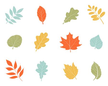 colección hermosa colorida otoño deja . estilo de dibujos animados simple plana . naturaleza .. formas exóticas de árboles y hojas de iconos verdes. aislado en el fondo blanco .
