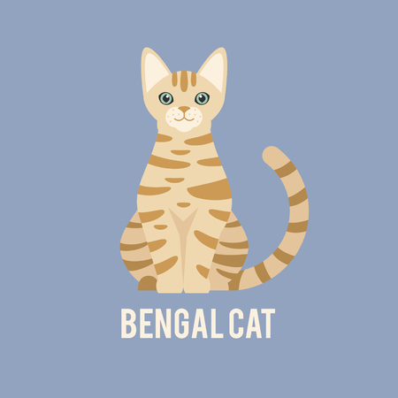 pedigreed: A Bengal cat is sitting.