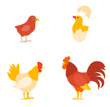 A colorful farm birds collection. Vector Illustration of Rooster, Hen, Chick and Eggs. Illustration