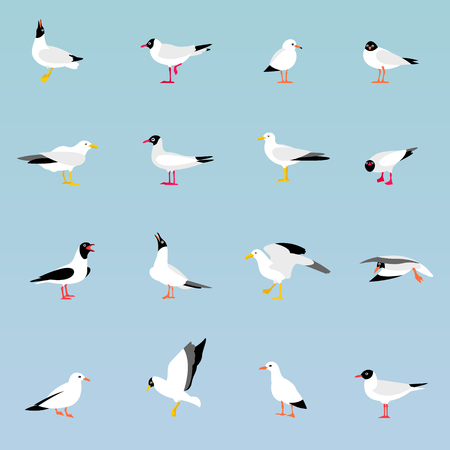 seabird: Vector set of beautiful seagulls.