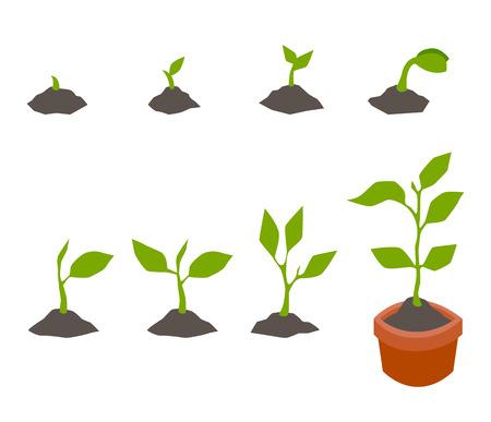 Infografisch van plantenboom.