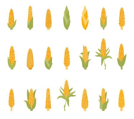 Set of corn with green leaves.
