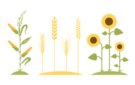 Wheat field. Sunflower icon cartoon. Illustration