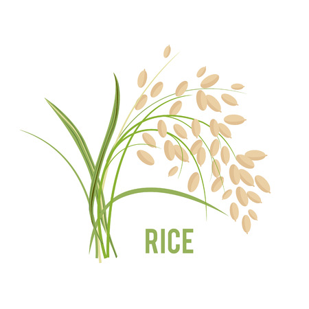 Grains in the flat style icon design vector illustration
