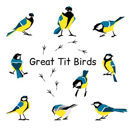 Vector bird icon collection. Great tit. Feathered in a flat style isolated on a white background.