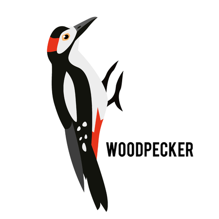 Great Spotted Woodpecker isolated on white background. Winter bird in a flat style. Forest animal. Stock Illustratie