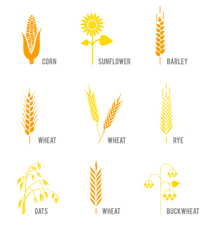 Cereal icons set with rice, wheat, corn, oats, rye, barley, sunflower, buckwheat.