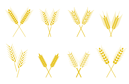Set of simple wheats ears icons and wheat design elements for beer, organic wheats local farm fresh food, bakery themed wheat design, grain, beer elements, wheat simple. Wheat ears or rice icons set. Illustration