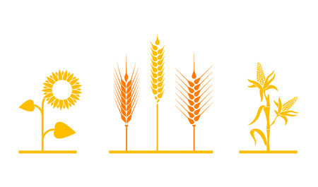 Fields of sunflowers, wheat, and corn. Set of simple wheat ears icons and grain design elements for beer, organic wheat local farm fresh food, bakery themed wheat design. Illustration