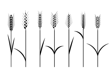 Wheat field. Cereals icon set with rice, wheat, corn, oats, rye, barley.