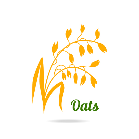 Oat ears. Hand drawn vector illustration isolated on white background for packaging design. Illustration