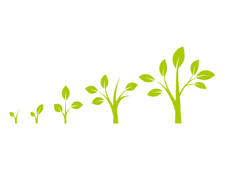 Infographic of planting tree. Tree growth diagram with green leaf, nature plant. Seedling agriculture.