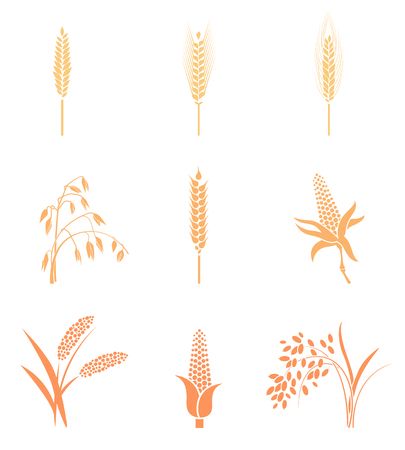 Wheat Ears Icons and Logo Set. Concept for organic products label, harvest and farming, grain, bakery, healthy food. Contour lines. Flat design.