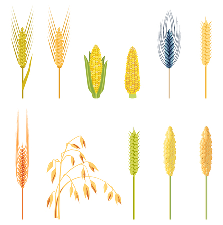 Cereals icon set with rice, wheat, corn, oats, rye, barley. Field plants in a flat style. Organic wheat, bread agriculture and natural eat. A set of ears. Illustration