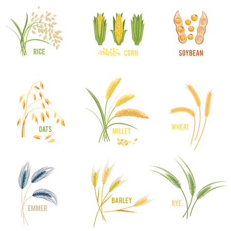 Cereal Plants vector icons illustrations set.