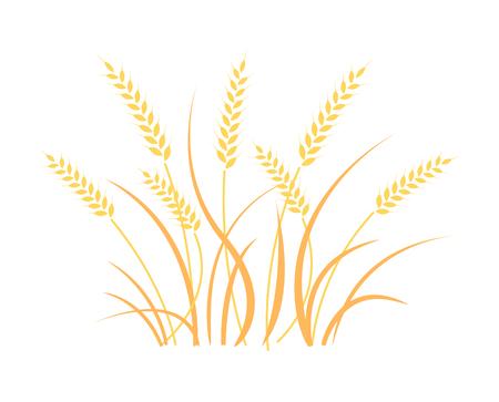 Wheat graphic design in white background.