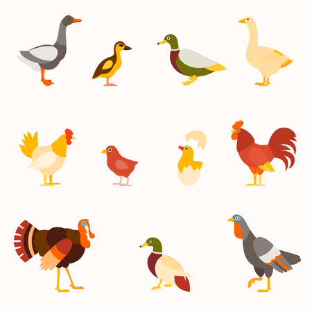 Farm birds vector set in flat style design.