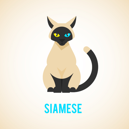 Siamese cat is sitting. Animal in a flat style.