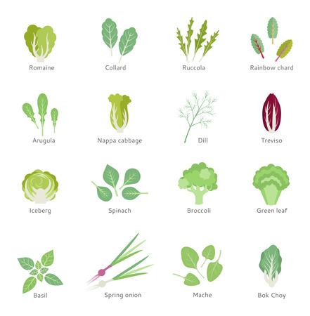 Ensalada de ingredientes. Vegetales de hoja vector conjunto de iconos flat. Orgánico y vegetariano. Ilustración de vector