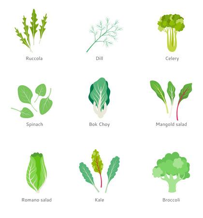 Healthy ingredients for vegetable salad.