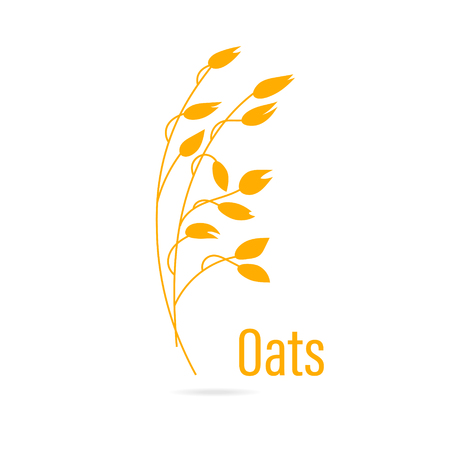 Oats cereals grain.