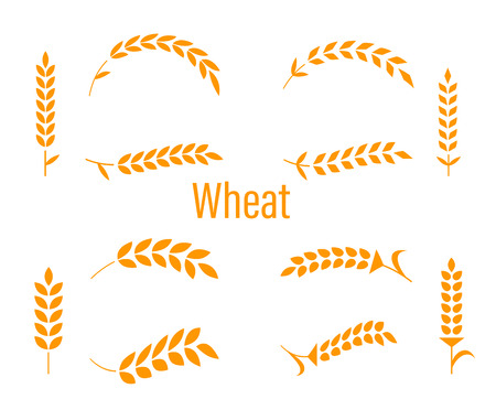 Wheat ears or rice icons set illustration on white background.