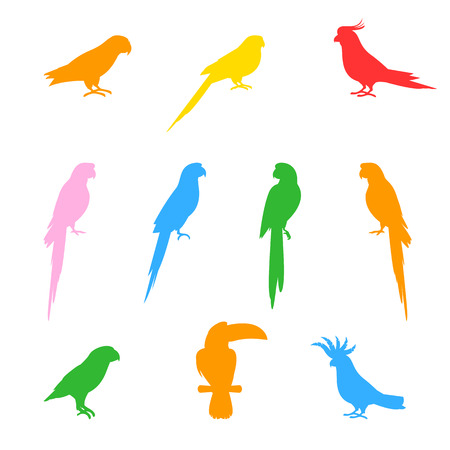 Silhouettes of birds and parrots, isolated on white background.