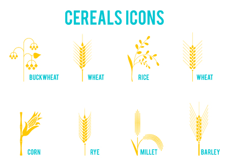 Cereals icons of grain plants. Set of icons with rice, wheat, corn, oats, rye, barley, wheat, buckwheat corn seeds 일러스트