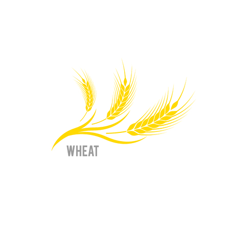 Cereals icon. Vector logo design and elements of wheat grain, wheat ears, wheat seed, or wheat rye. Organic , agriculture seed, plant and food, natural eat.