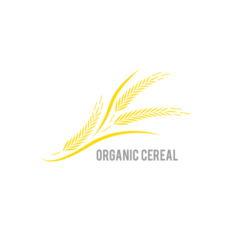 Ear of wheat on white background. Organic , agriculture seed, plant and food, natural eat. Concept for organic products label, harvest and farming, grain, bakery, healthy food.