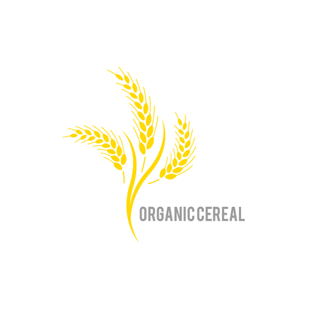 Organic , agriculture seed, plant and food, natural eat. Concept for organic products label, harvest and farming, grain, bakery, healthy food. Ear of wheat on white background.