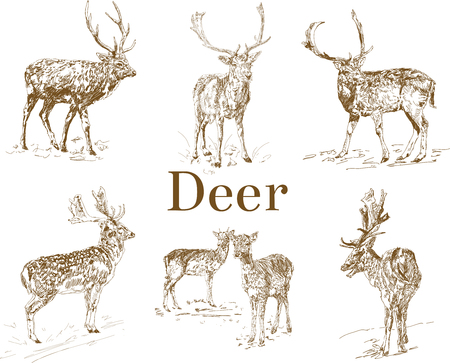 Nature objects. Vintage engraving. Hand drawn, doodle graphic with deer. Vector illustration isolated on white background. Set of animals. Nature objects. Vintage Engraving. Elk Icon. Forest animal.