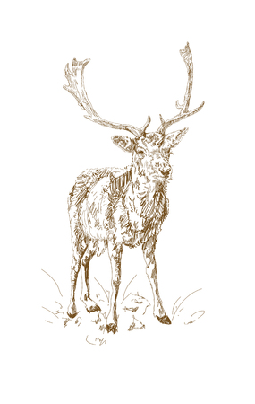 Forest deer with branchy horns in sketch style. Hand drawn minimalism style.