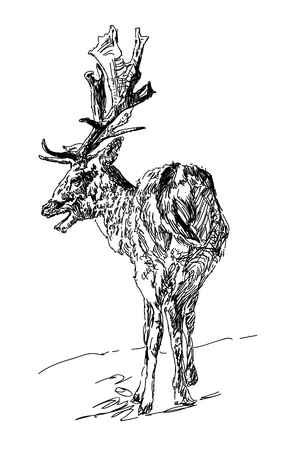 Forest deer with branchy horns in sketch style. One line design silhouette of deer.