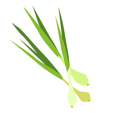 Young onions with stems. Vegetable in flat style isolated on white background.