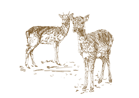 Two young deer in sketch style. Hand drawn illustration of a beautiful black and white animal.